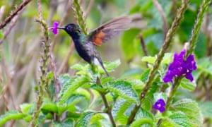The Hummingbird Garden at El Silencio Lodge and Spa, Costa Rica