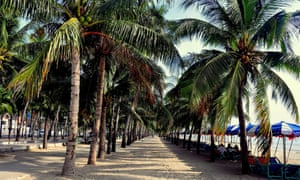 Bang Saen beach is backed by coconut palms.