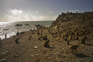 One of the first places Hurricane Maria hit in US territory was Monkey Island, a 40-acre outcrop off the east coast of Puerto Rico