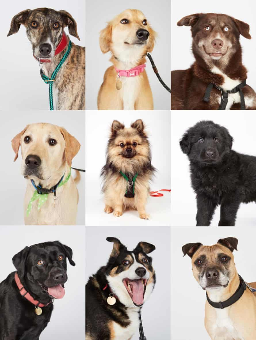 Some of the dogs at the Wood Green rescue centre