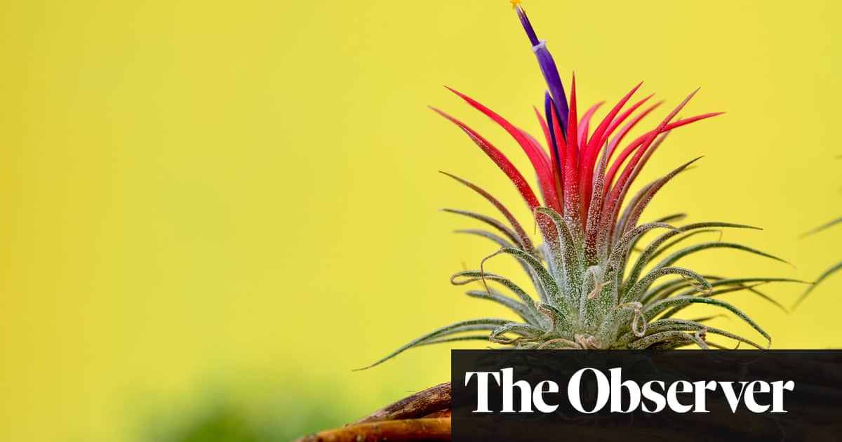 Gardens Plants That Live On Air James Wong Life And Style