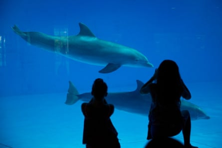 Visitors take photographs of dolphins as they swim by at the National Aquarium in Baltimore.