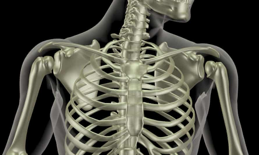 The human skeleton offers a microscopic view of the past.