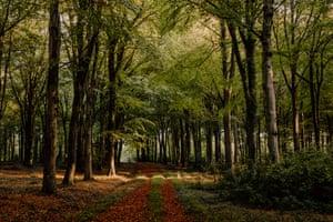 Woods near Sheldrake's Hampshire cottage.