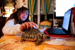 A girl strokes a Hermann's tortoise in a flat in Paris