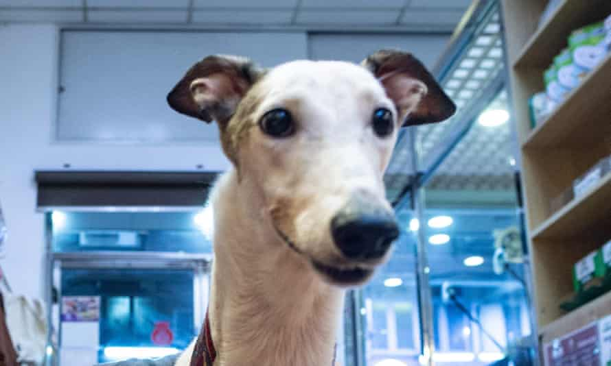 Some NSW greyhound owners rely on vague rationales for euthanising dogs when they retire from the track.