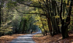 Two cyclists, cycling along a quiet lane in Epping Forest, with backlit autumn beech leaves