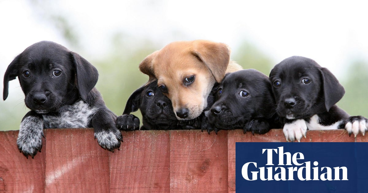 Unethical puppy and kitten farms 'to be banned' in England