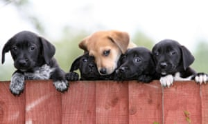 Well-cared for puppies at the Dogs Trust