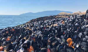 Dead mussels in British Columbia, Canada. Experts say a 'heat dome' probably killed 1bn marine animals