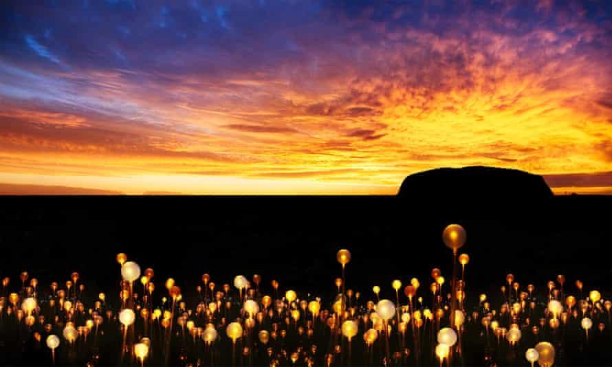 Field of Light in  Uluru