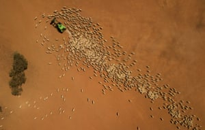 Farmer Garry Mooring feeds his sheep in drought-affected Louth, New South Wales