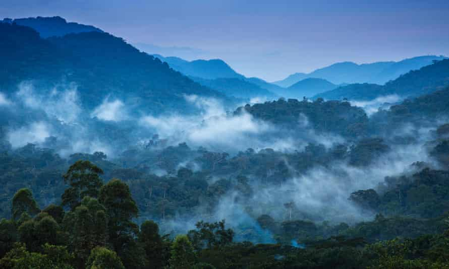 The primeval Bwindi Impenetrable Forest