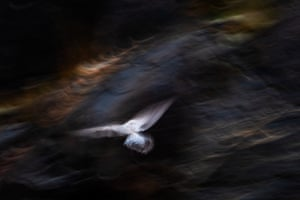 Nature's studio, second place: Jan van der Greef, 'Gull and light'