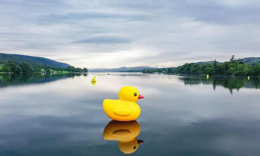 Rubber duck seen in closeup on Coniston Water, Lake District, UK