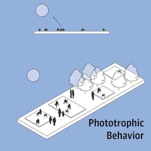 Phototrophic behaviour