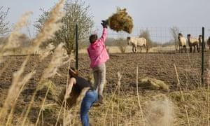 Activists throw hay over the fences of the Oostvaardersplassen nature reserve in April.