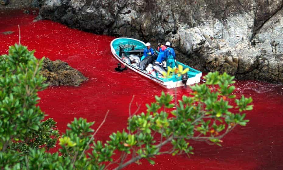 """Japanese fishermen riding a boat loaded with slaughtered dolphins at a blood-covered water cove in Taiji harbor in 2003. The fisherman say they now use a more """"humane"""" method that results in less blood being released."""