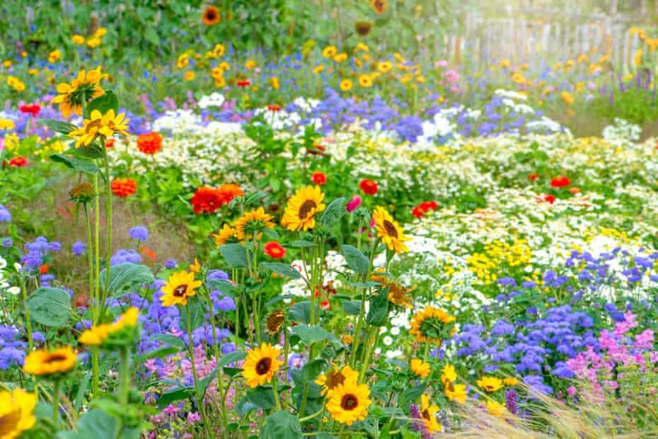 Vibrant cottage garden