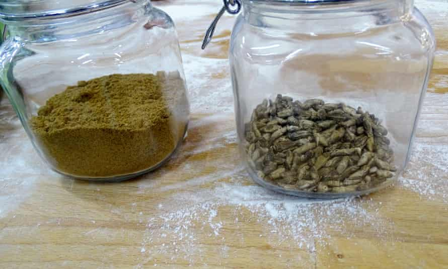 Flour ground from dried crickets, left, alongside crickets, at the Fazer bakery, Helsinki