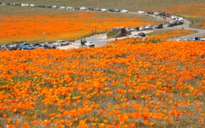 Lancaster, US Cars line up to enter the Antelope Valley California Poppy Reserve