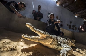 Mamdouh Hassan, right, shows a crocodile to visitors at his house
