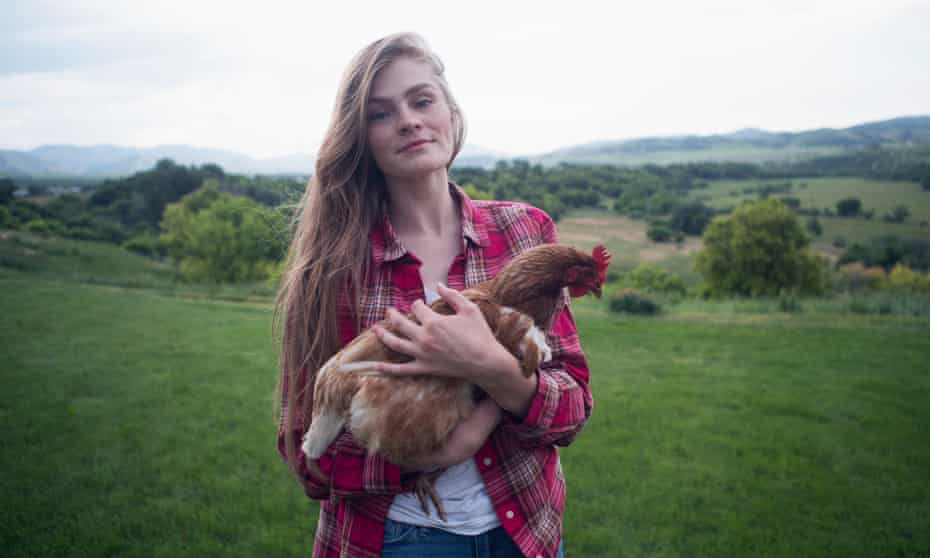The domestic chicken population in the UK has been stuck at about 500,000 since 2010.