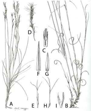 Sartidia isoalensis