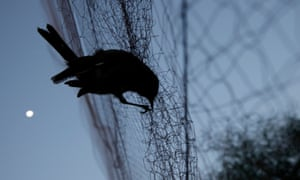 Up to 36 million birds are being are stolen or killed annually, according to the UNEP report.