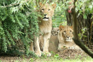 Motshegetsi (left) and Majo, originally from Namibia, arrived in Leipzig last month from Basel zoo.