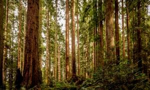 Redwood national park in California.