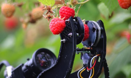 A raspberry is gently squeezed between two mechanical arms, watched by a lens.