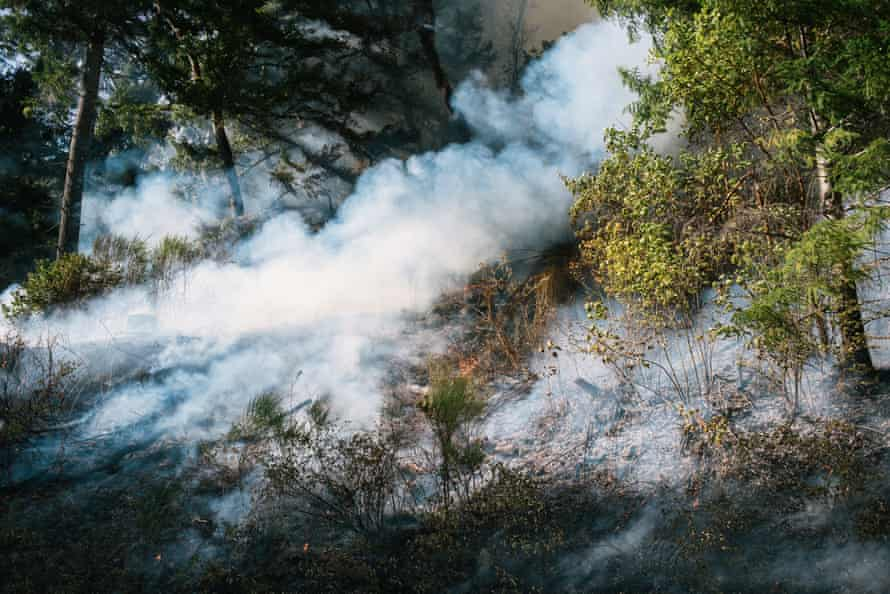 Smoke during the prescribed burn.