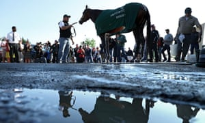 Nyquist at the Pimlico track on Friday.