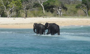 Two elephants walk back to shore after being rescued by Sri Lankan navel personnel.