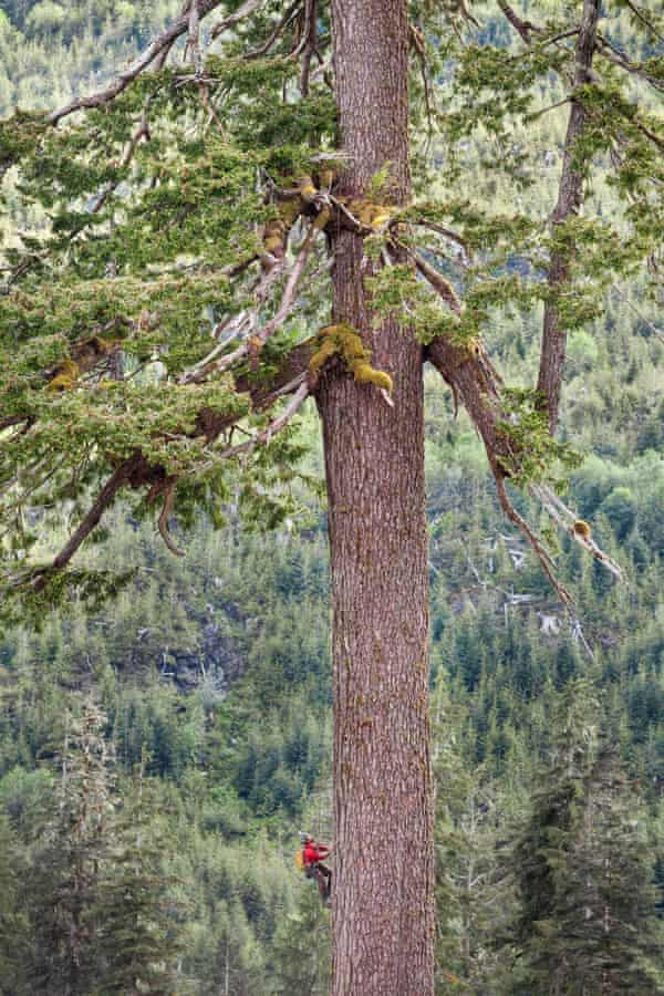 Big Lonely Doug, one of Canada's tallest tree.