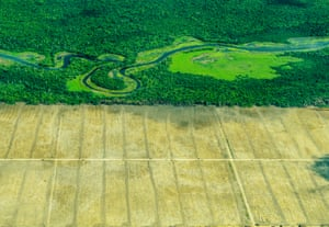 Photographer of the Year runner-up: The boundary of disaster, by Roberto BuenoBoundary between forest and land stripped of trees for agricultural use. This straight line represents the border between nature and humanity. However, human impact like this can be seen all over the world with ecosystems going through huge, dramatic changes