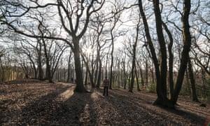 man in Sydenham Woods in winter