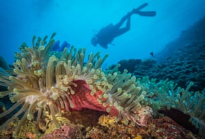 Coral reef off the shore of Tanzania, where scientists have discovered an area where cool water is protecting marine life.