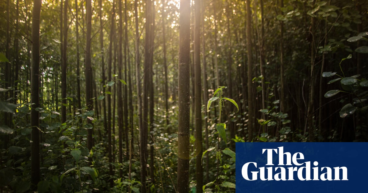 Europe losing forest to harvesting at alarming rate, data suggests