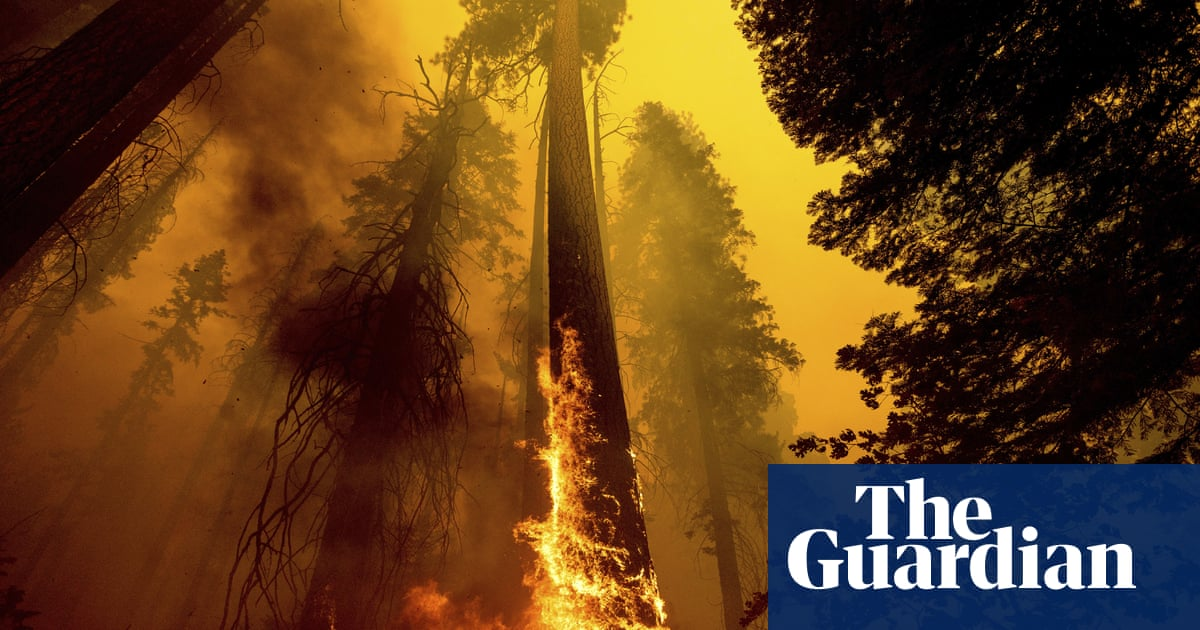 Giant sequoias and fire have coexisted for centuries. Climate crisis is upping the stakes