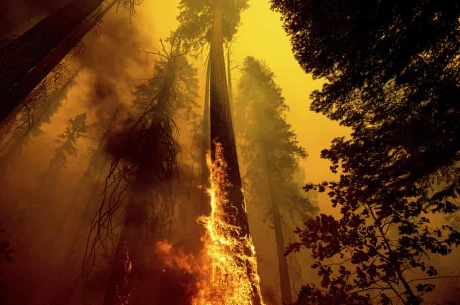 Flames from the Windy fire shoot up the trunk of a giant sequoia in Sequoia national forest in California on 19 September.
