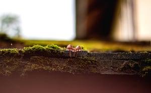 Nature on My Doorstep, finalist Mushrooms on My Roof by Tamara Wagner-Bosancic, taken in Gaming, Austria