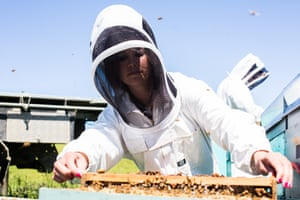 Sera Grubb of Mana Kai Honey working the hives