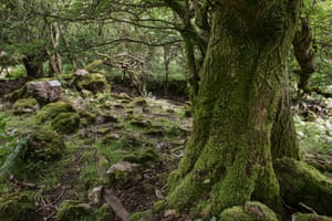 Black Mountains woodland