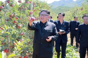 Kim visiting a fruit farm at Kwail County, South Hwanghae Province.