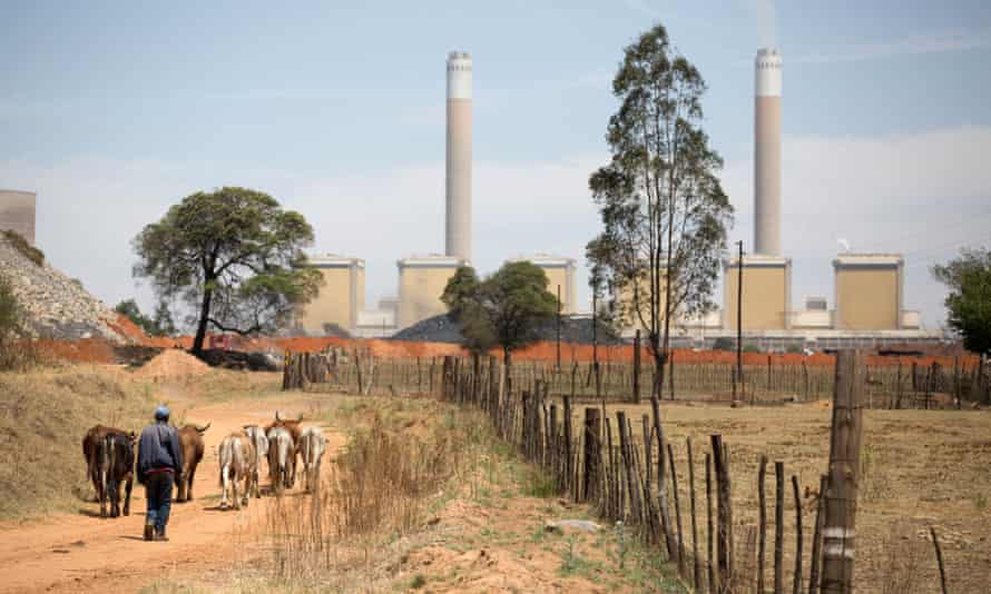 A man drives cattle near the Kendal power station in Mpumalanga province, South Africa.