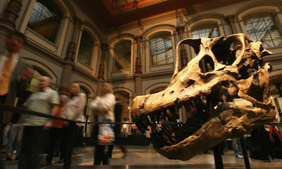 A Brachiosaurus skull at the new rooms of the Museum of Naturkunde in Berlin.