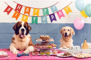 Two dogs sit at a table covered with cakes, with a happy birthday sign hanging above