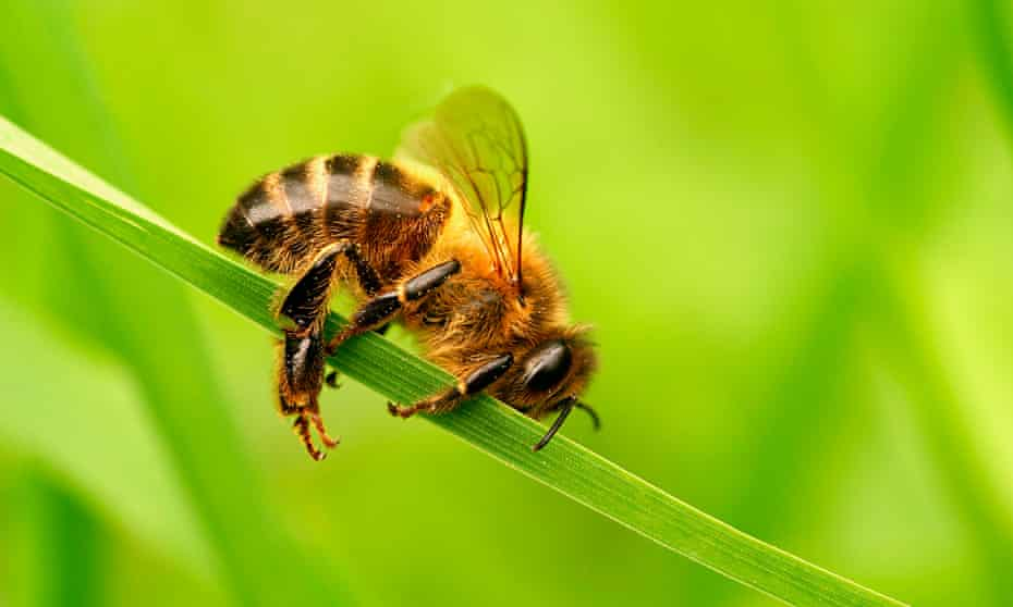 The photographer David Slater was falsely accused of gluing a bee to a blade of grass.